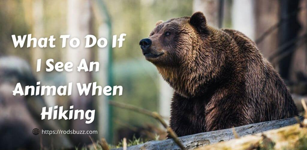 What To Do If I See An Animal When Hiking